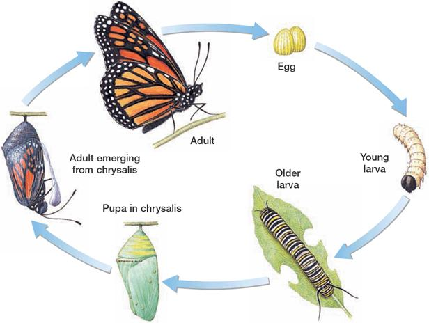 Biology Diva / Zoology Chapter 31