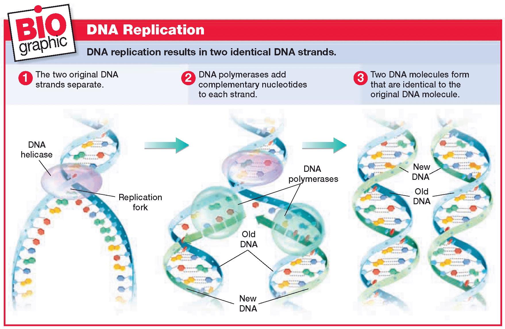 Biology Diva / Chapter 9